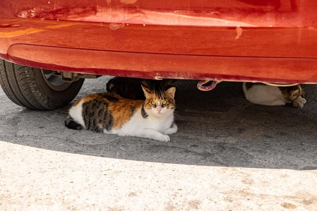 Two cats sitting under a car