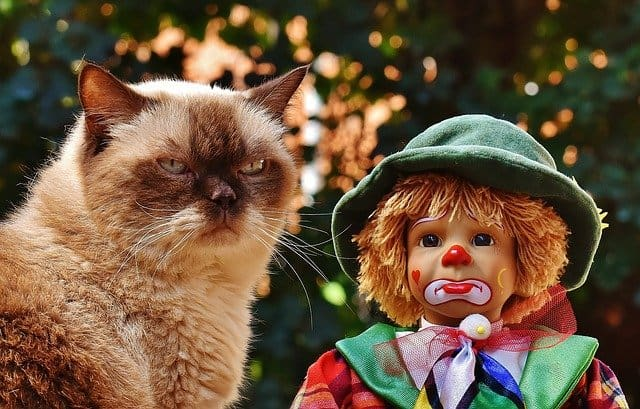 Cat looking bored at the camera, with a strange safe clown doll next to the cat