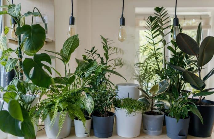 Counter inside home lined with houseplants of various sizes and shapes