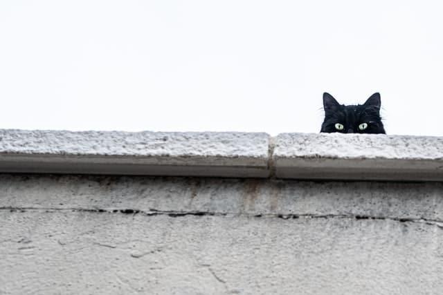 Black cat peeking over building ledge