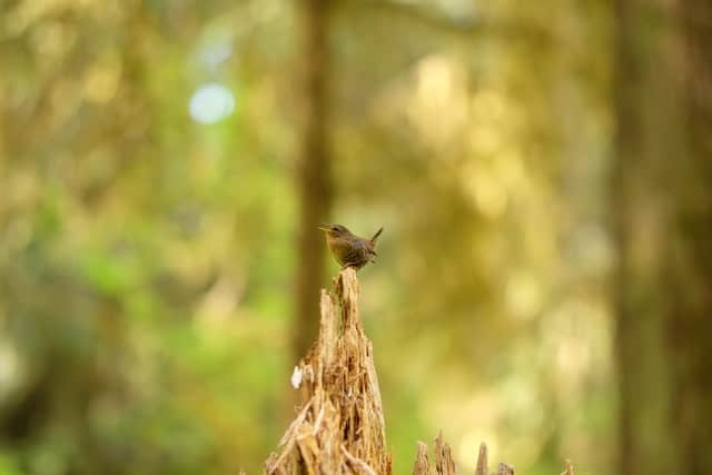 Tiny bird in forest, sitting on branch