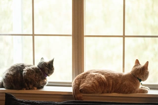 Two cats indoors, hunting through a window