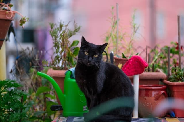 Black cat sitting outside on patio