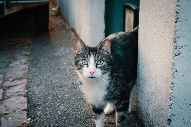 Cat outside, standing at corner of building