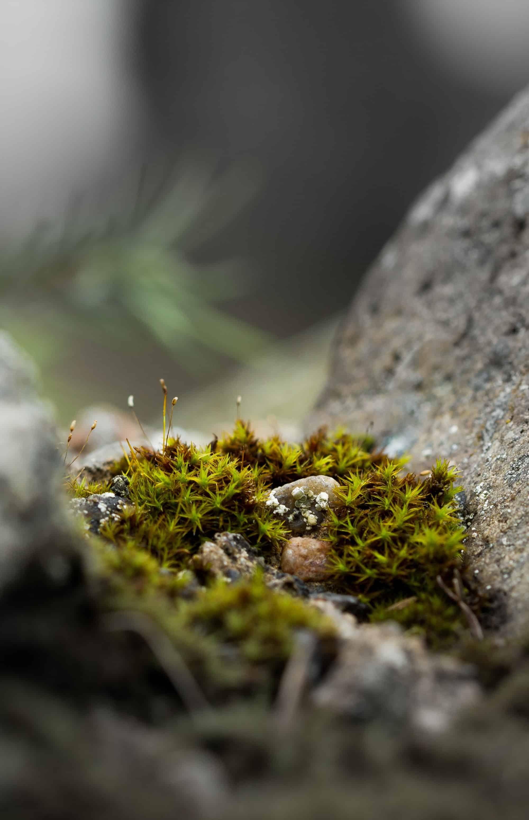 Mossy nook between rocks